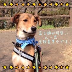 fc2blog_20140325011008d36.jpg