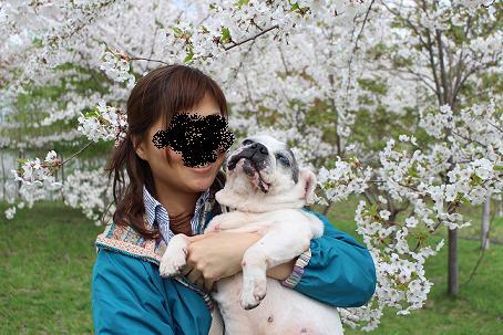 おいどんと桜
