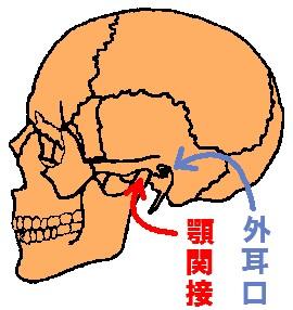顎関節と外耳口