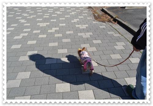 豊橋公園DSC_0172