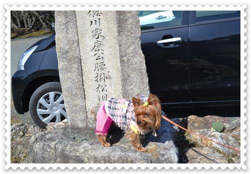 豊橋公園DSC_0175