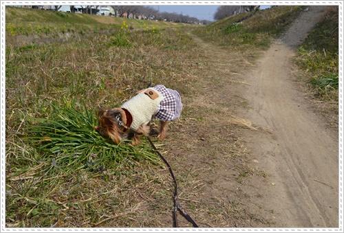散歩と新聞DSC_0233