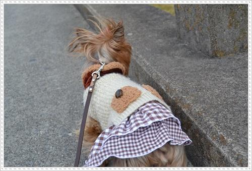 散歩と新聞DSC_0239
