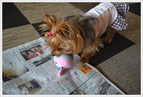 散歩と新聞DSC_0241