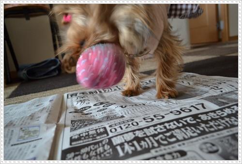 散歩と新聞DSC_0242