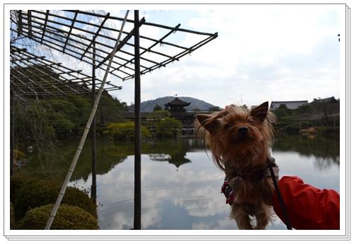 京都2DSC_0406