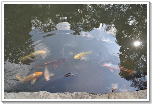 京都2DSC_0425