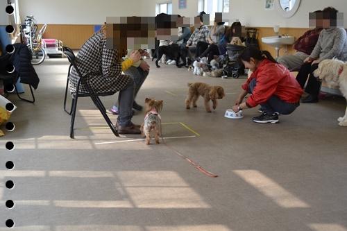 犬の学校DSC_0447