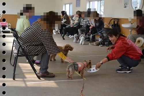 犬の学校DSC_0448