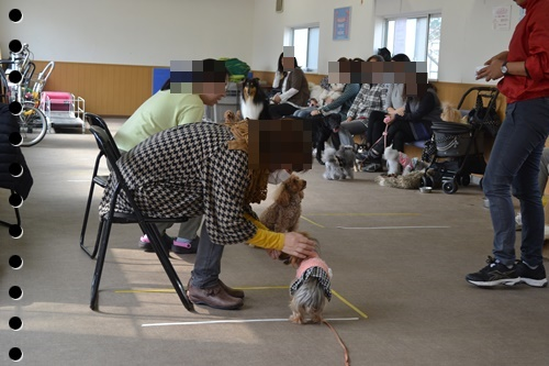 犬の学校DSC_0449