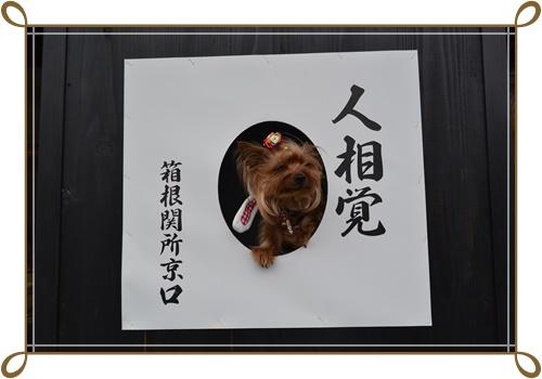 箱根DSC_0811-20140421