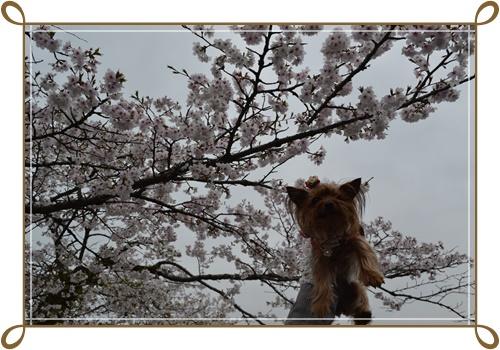 箱根DSC_0824-20140421