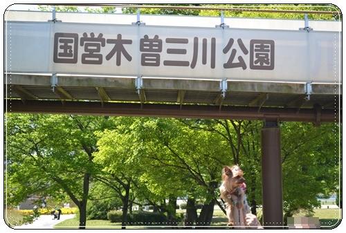 木曽三川公園DSC_0013-20140511