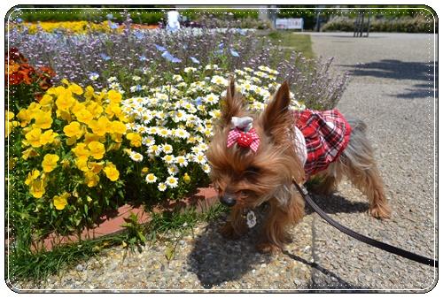 木曽三川公園DSC_0026-20140511