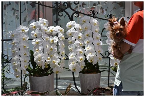 花の都公園DSC_0098-20140517