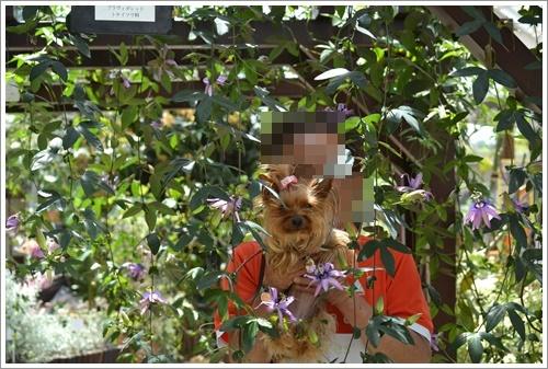 花の都公園DSC_0102-20140517