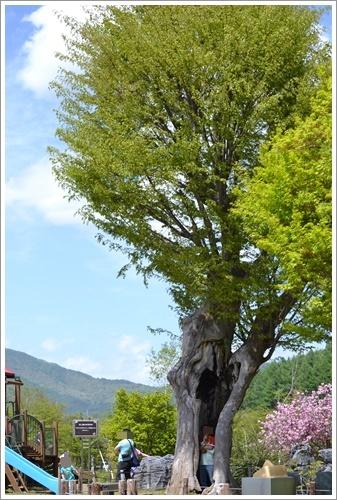 花の都公園DSC_0111-20140517
