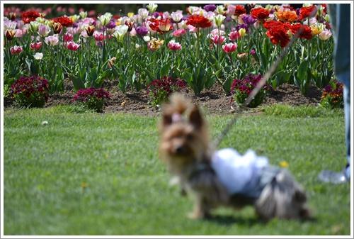 花の都公園DSC_0131-20140517