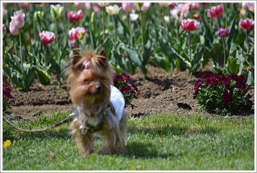 花の都公園DSC_0133-20140517