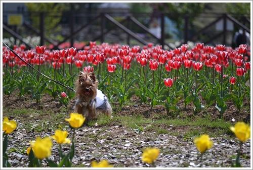 花の都公園DSC_0147-20140517