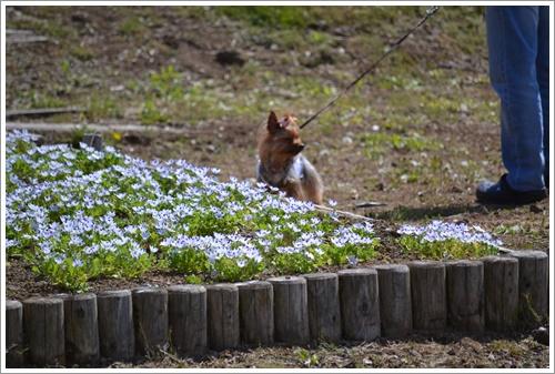 花の都公園DSC_0140-20140517