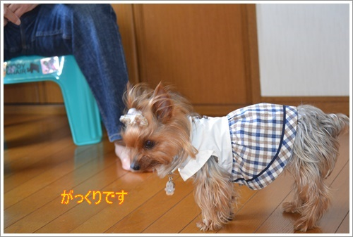 運動会DSC_0202-20140525