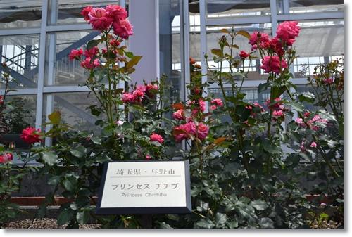 島田バラ園DSC_0442-20140608