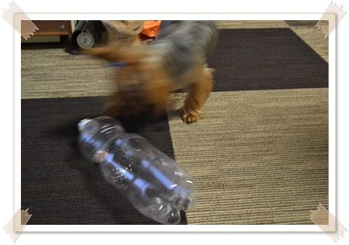 大きなペットボトルDSC_0482-20140614