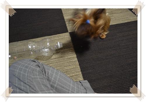 大きなペットボトルDSC_0485-20140614