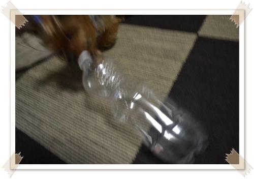 大きなペットボトルDSC_0486-20140614