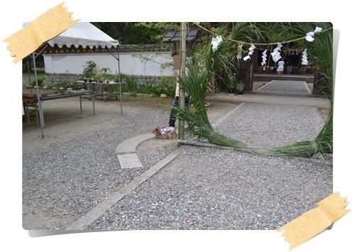 茅くぐりDSC_0499-20140615