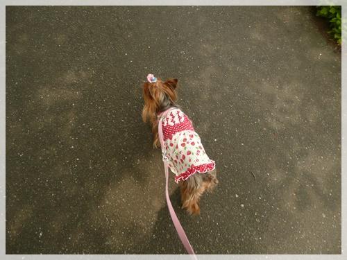 散歩P1040072-20140610