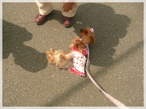 散歩P1040073-20140610