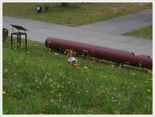 岡崎総合公園IMGP0047-20140621