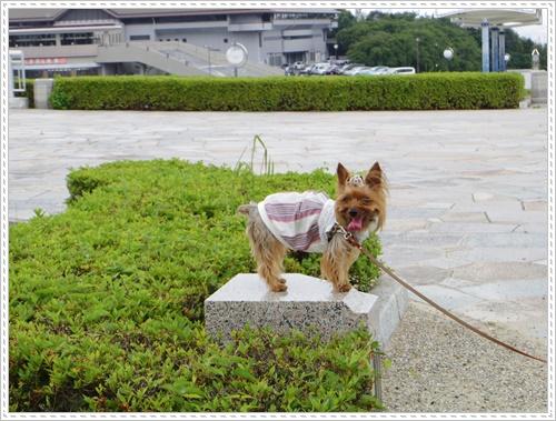岡崎総合公園IMGP0059-20140621