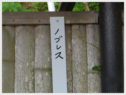 紫陽花の里IMGP0121-20140621