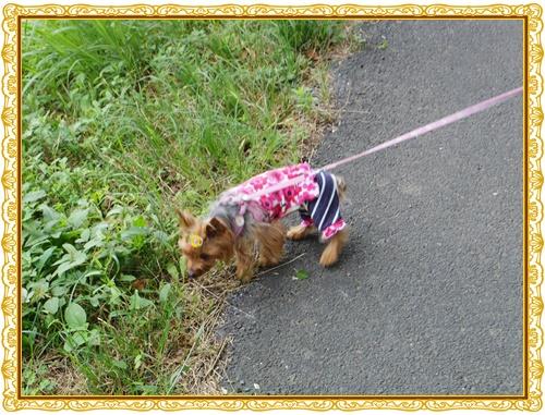 お散歩IMGP0251-20140713
