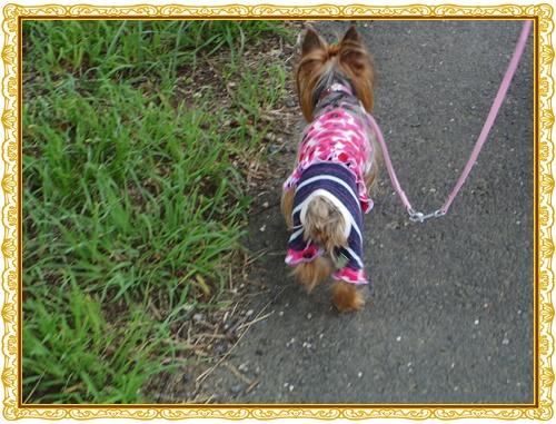 お散歩IMGP0253-20140713