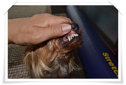 歯DSC_0612-20140708