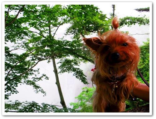 華厳の滝IMGP0374-20140720