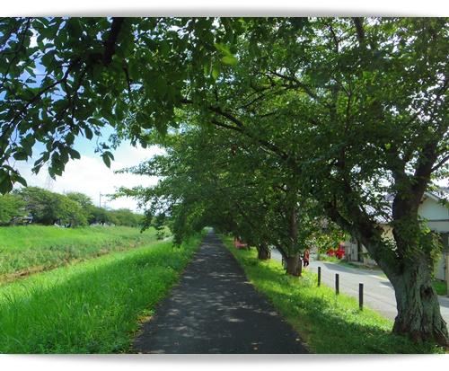 朝散歩IMGP0658-20140819