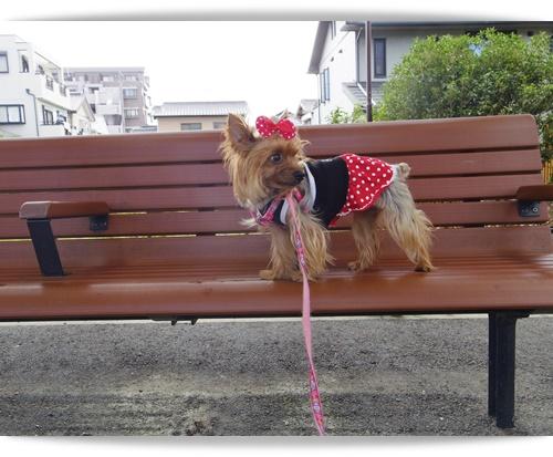 朝散歩IMGP0659-20140819