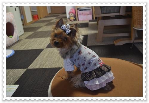 ぷうママさんのお洋服DSC_0732-20140819