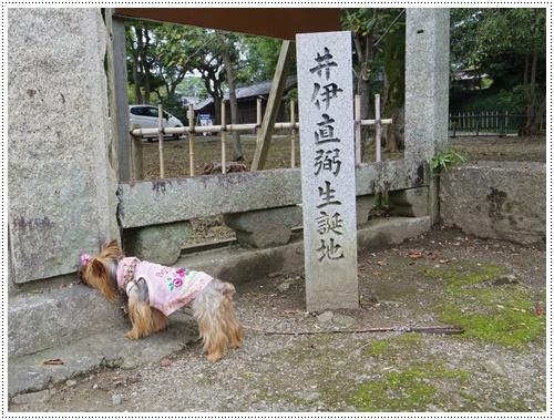 彦根城公園IMGP0824-20140906