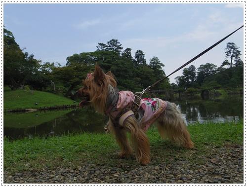 彦根城公園IMGP0827-20140906