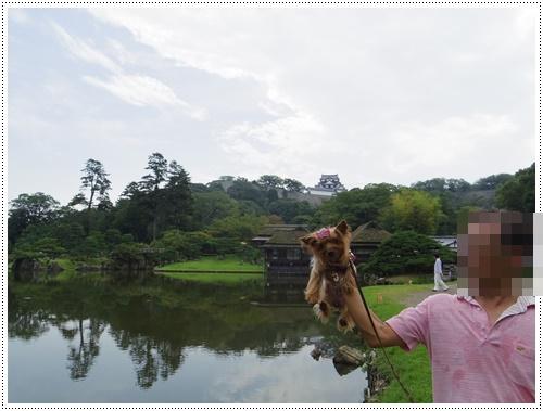 彦根城公園IMGP0828-20140906