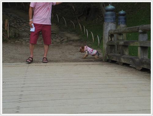 彦根城公園IMGP0831-20140906