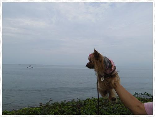 琵琶湖IMGP0833-20140906