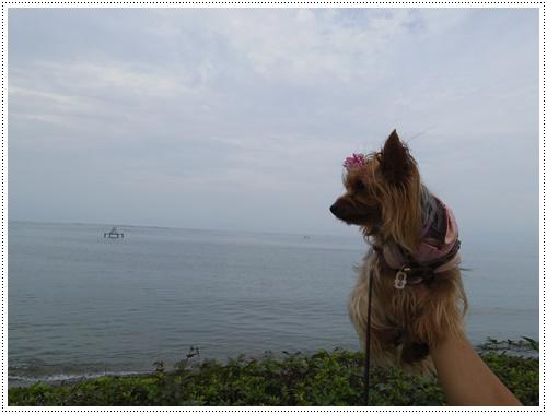 琵琶湖IMGP0834-20140906