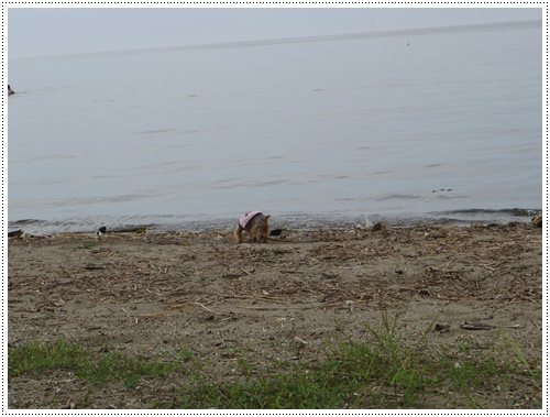 琵琶湖IMGP0836-20140906